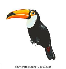 Toucan bird. Vector