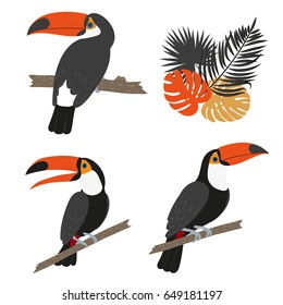 Toucan set. Vector illustration of tropical birds isolated on white.