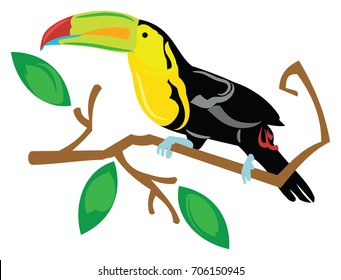 Toucan sitting on a tree branch