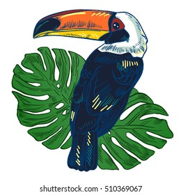 Toucan, Vector hand drawn illustration