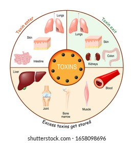 Toxins. Process of Detoxification and elimination. Enter, exit, and store of toxins in humans body. A toxin is a poisonous substance that capable of inducing antibody formation.