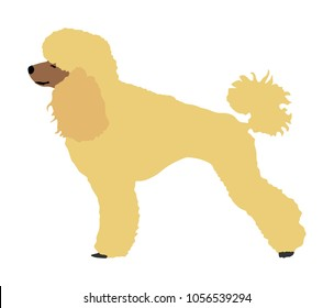 Toy Poodle vector. Portrait of Royal Poodle vector silhouette illustration isolated. French black poodle standing. Beware of dog.