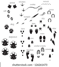 Traces of animals, birds, people