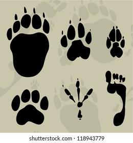 tracks of animals