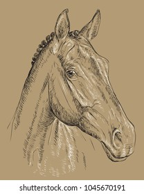 Trakehner horse portrait. Horse head  in profile in black and white colors isolated on beige background. Vector hand drawing illustration