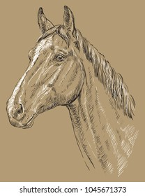 Trakehner portrait. Horse head  in profile in black and white colors isolated on beige background. Vector hand drawing illustration