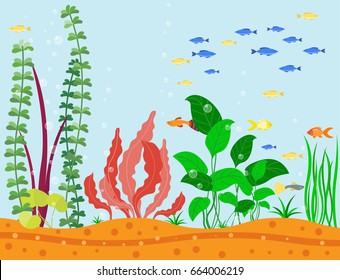 Transparent aquarium sea aquatic background vector illustration habitat water tank house underwater fish algae plants.