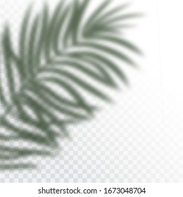 Transparent shadows of tropic Leaves. The shadow overlay effect. Background of tropical plants. Palm leaves, jungle leaf. The poster for sale and an advertizing sign. Vector illustration