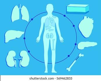 Transplantation. The most common transplanted human organs: heart, liver, kidney, bone marrow, skin, pancreas. Blue background.