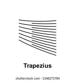 Trapezius, organ icon. Element of human organ icon. Thin line icon for website design and development, app development. Premium icon
