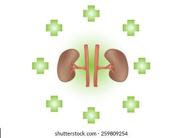 treat Kidneys.