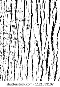 Tree bark texture. Wooden background for graphic design. Vector illustration. Distressed overlay.