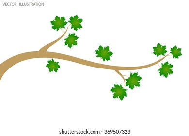 Tree branch with green leaves over white background. Vector  illustration.