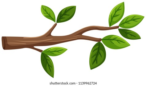 Tree branch with leaf on white background illustration