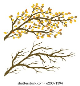 Tree branch with yellow leaves. Autumn and winter naked twigs. Vector graphic illustration isolated on transparent  background. Artwork design element.