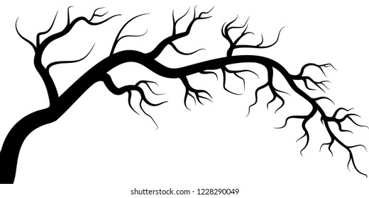 tree branches isolated