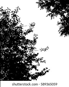 Tree branches with leaves isolated, black and white vector background with foliage silhouettes