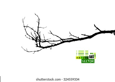 Tree branches. Vector