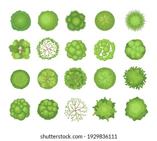 Tree crowns set. Top aerial view, green foliage, park, forest, garden plants isolated on white. Vector illustrations for landscape, nature, ecology concept