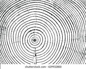 tree cut annual rings vector