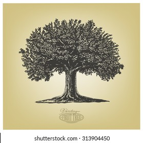 Tree in engraving style.  Vector illustration of a fruit tree in vintage engraving style. Isolated, grouped.