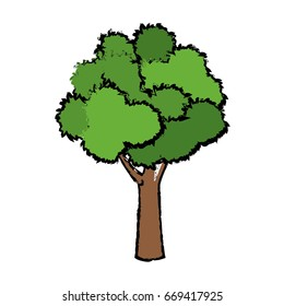 tree for forest park and garden plant natural