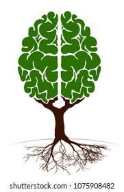 A tree in the form of a human brain. Two hemispheres. Green plant for an article on knowledge and teaching