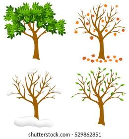 Tree in four seasons - spring, summer, autumn, winter. Vector illustration. Isolated on white background