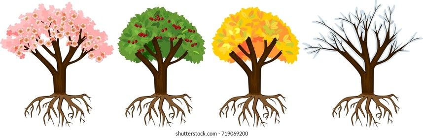 Cartoon Tree With Roots Images Stock Photos Vectors Shutterstock You found 301 tree roots graphics, designs & templates from $2. https www shutterstock com image vector tree four seasons spring summer autumn 719069200