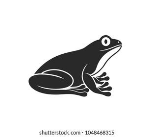 Tree frog. Isolated frog on white background