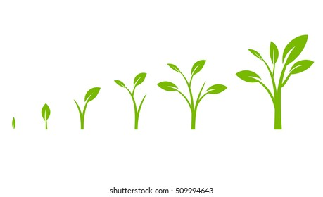 Tree growth diagram with green leaf. Business cycle development. Vector illustration isolated on white background.