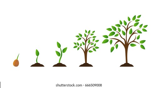 DIAGRAM] How Trees Grow Diagram FULL Version HD Quality Grow Diagram -  SNORTDIAGRAM.LEASIATIQUE.IT