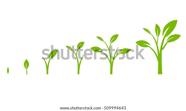 tree growth diagram with green leaf  business cycle development  vector  illustration isolated on white