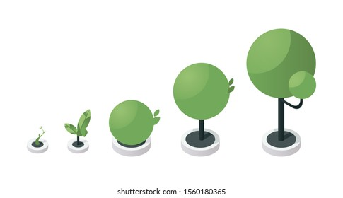 Tree growth stages isometric vector illustration. Green sapling development process steps, plant growing from little sprout to large tree. Gardening, horticulture, botany concept design element
