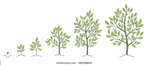 Tree growth stages. Plant development phases. Animation progression. Vector sketch infographic set. The life cycle.