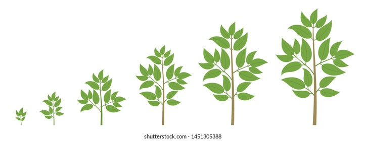 Animation Tree Grow Images Stock Photos Vectors Shutterstock Comes with a diagonal background image to use with your creative designs. https www shutterstock com image vector tree growth stages ripening period progression 1451305388
