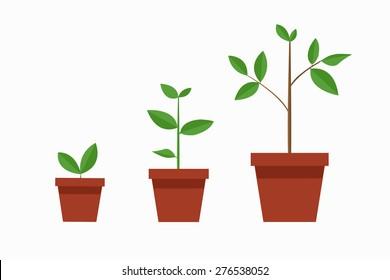 tree / growth / vector / illustration / flat design