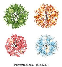 Tree icon in 4 different seasons - top view. Easy to use in your landscape design projects!
