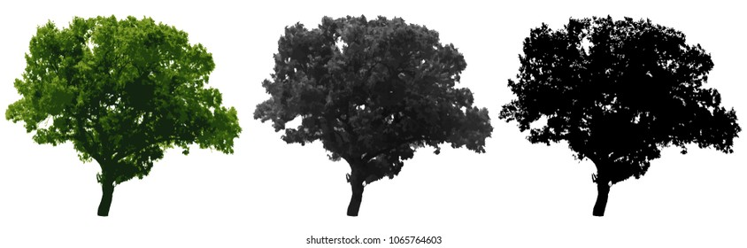 Tree isolated on white background. Vector illustration