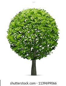 Tree isolated on white background with soft shadow. Use for landscape design, architectural decorative. Park and outdoor object idea for natural article both on print and website. Vector illustration.