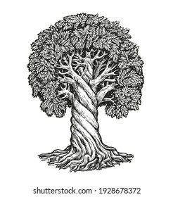 Tree isolated on white background. Nature concept sketch vector illustration