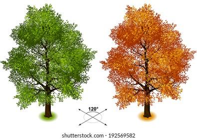 Tree. Isometric trees in vector