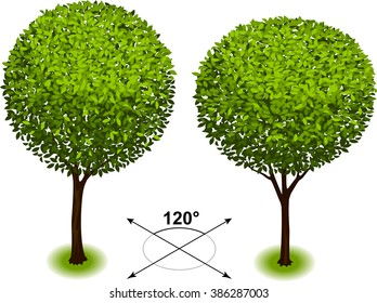 Tree. Isometric trees in vector. The elements are in the separate layers.