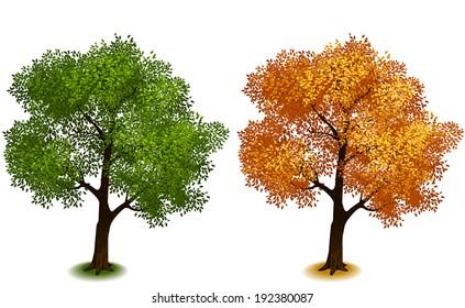 Tree. Isometric trees in vector (Four Seasons series)