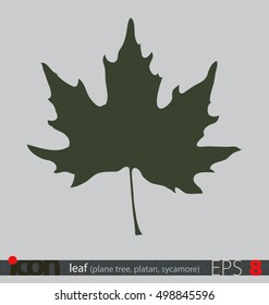 Tree leaf icon or logo (plane tree leaf); vector design on isolated background.