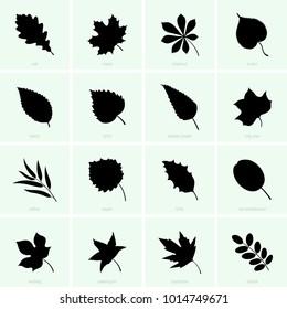 Tree leaf set