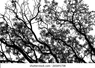 Tree with leaves background black and white. Vector