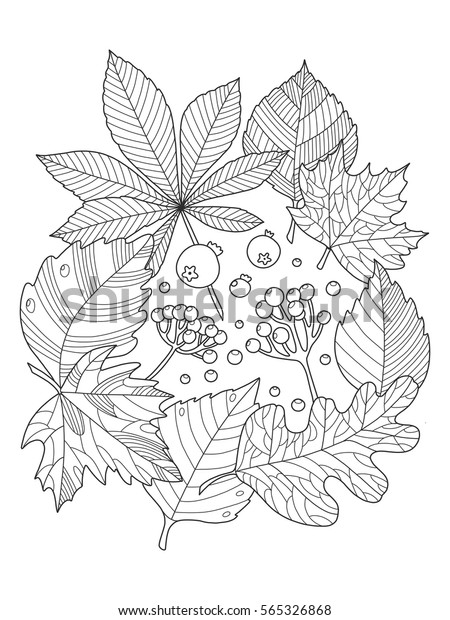 Tree Leaves Foliage Coloring Book Vector Stock Vector ...
