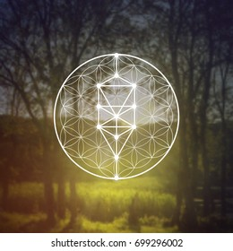Tree of life ancient symbol with flower of life sacred geometry pattern in front of blurry vector photo background.