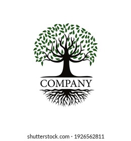 Tree logo design, roots vector - Tree of life logo design inspiration isolated on white background